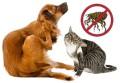 Parassiti degli animali domestici: come proteggere gli amici a quattro zampe
